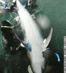 Delfín con cuatro aletas