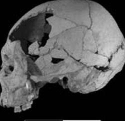 Cráneo de 40.000 años.